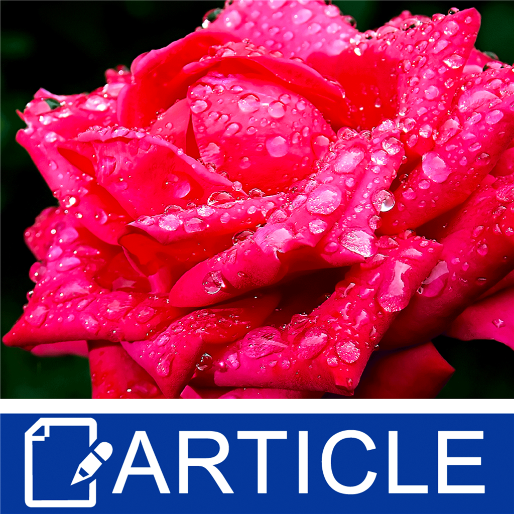 how to make rose hydrosol