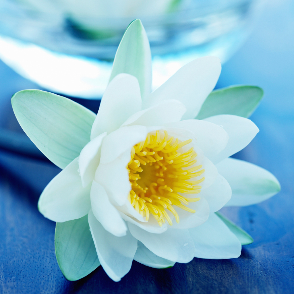 Crafters Choice Blue Lotus Spa Fragrance Oil 840 Wholesale