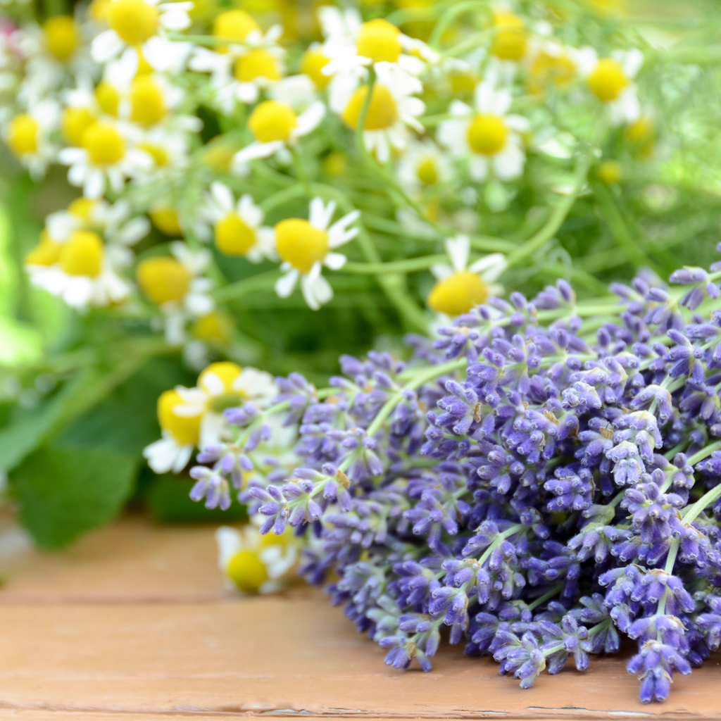 Lavender Chamomile Fragran Crafter S Choice