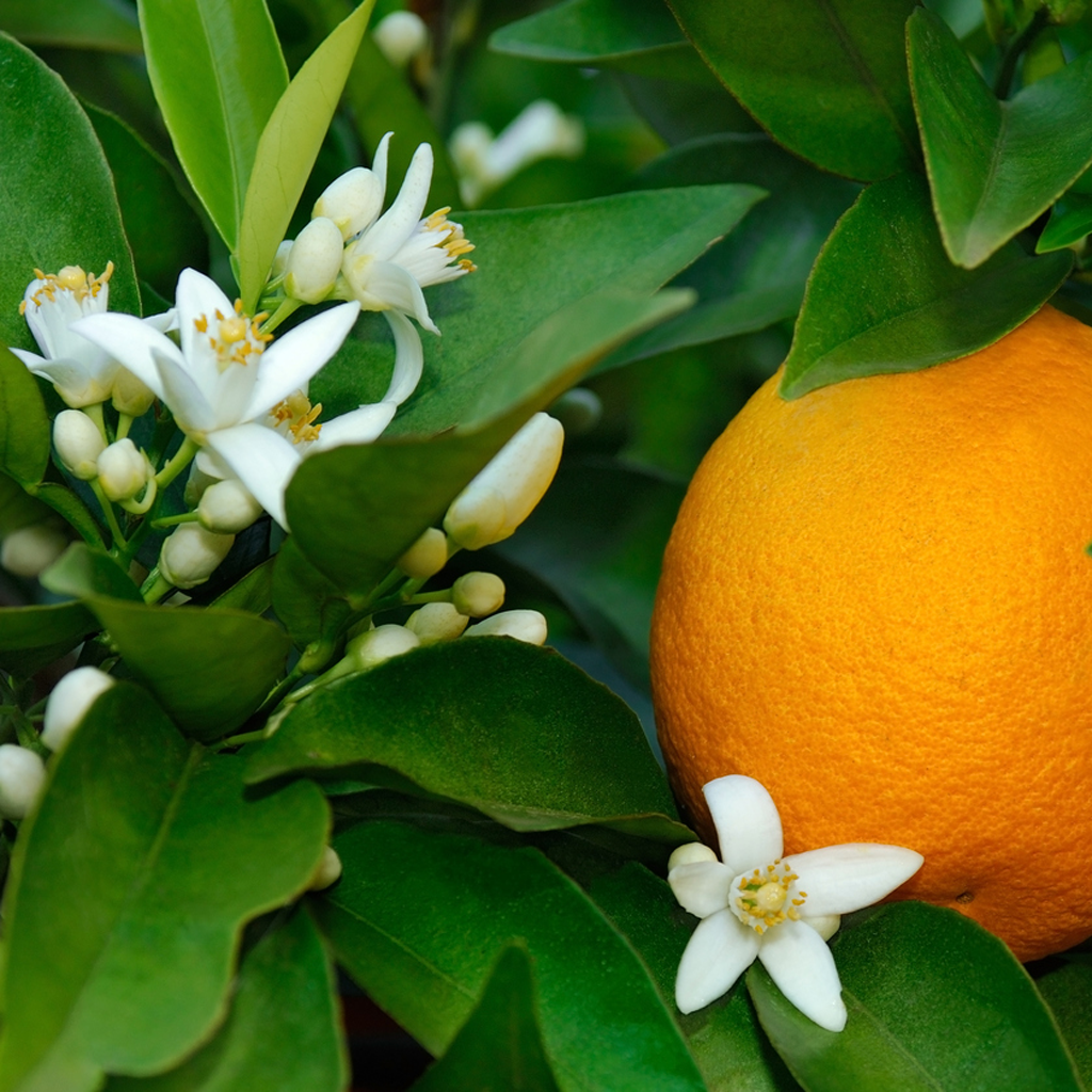 инфекция детей картинка цветок апельсина фамилию можно