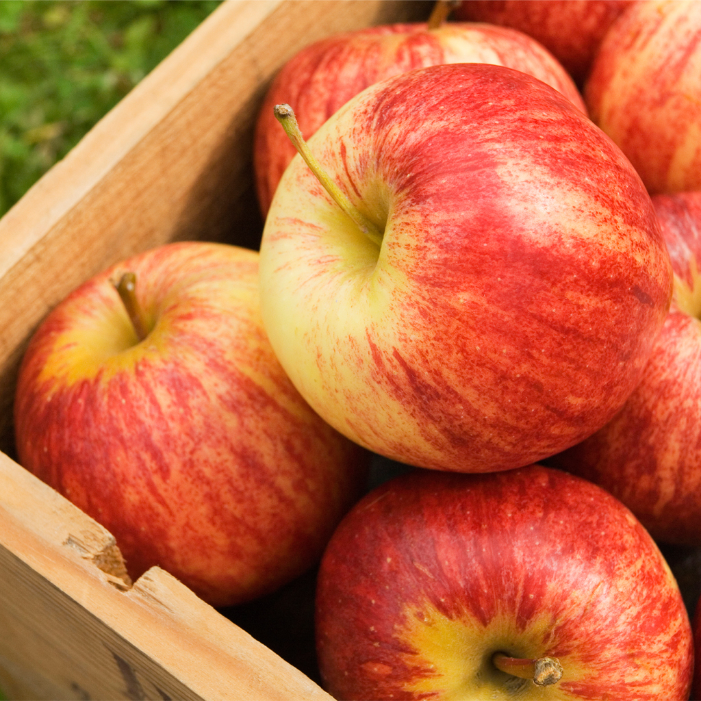 Crafters Choice™ Country Apple* Fragrance Oil 476