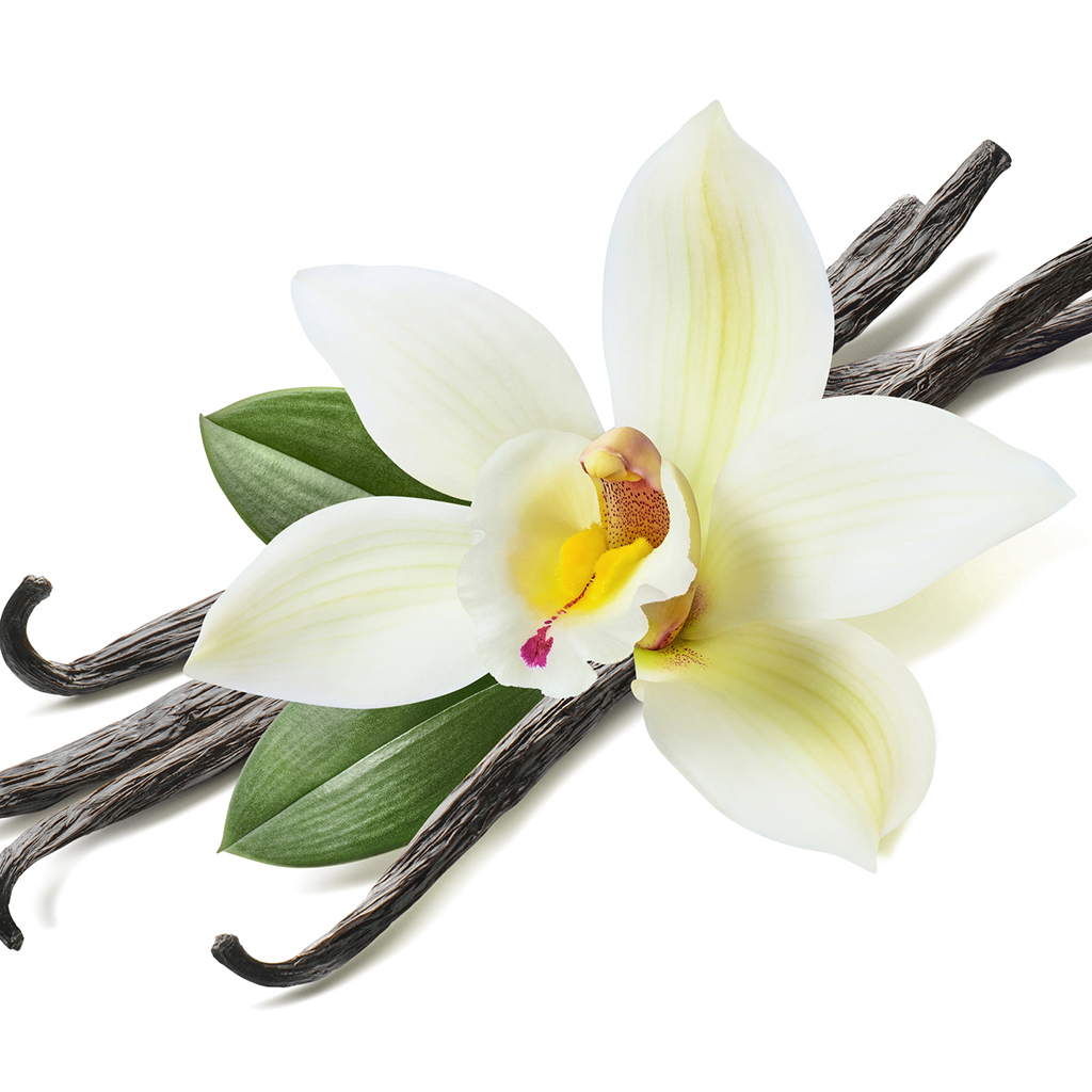 Crafters Choice Vanilla Bean Fragrance Oil 240 Wholesale Supplies Plus