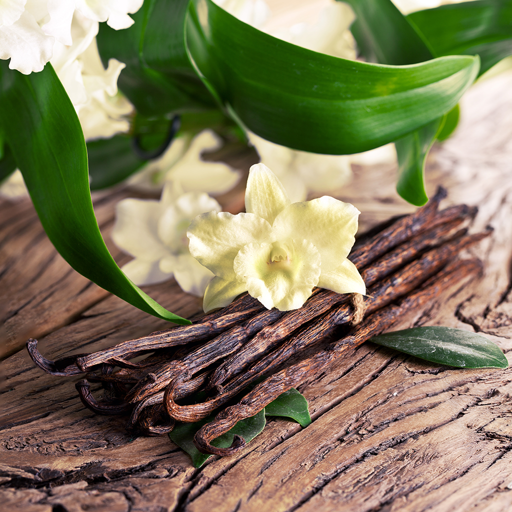 Crafters Choice™ Sandalwood Vanilla - EO & FO Blend 214 - Wholesale  Supplies Plus