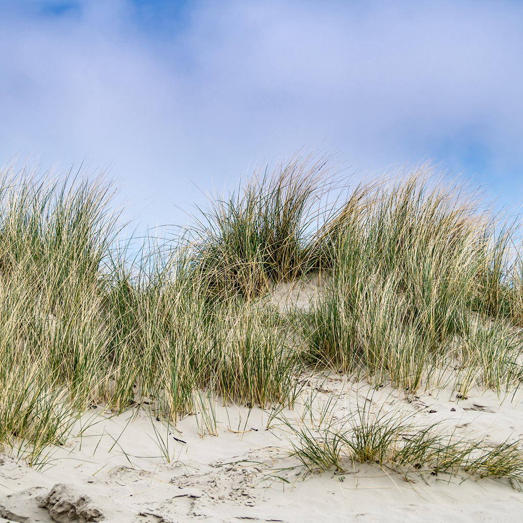 Crafters Choice Dune Grass Fragrance Oil 146 Wholesale