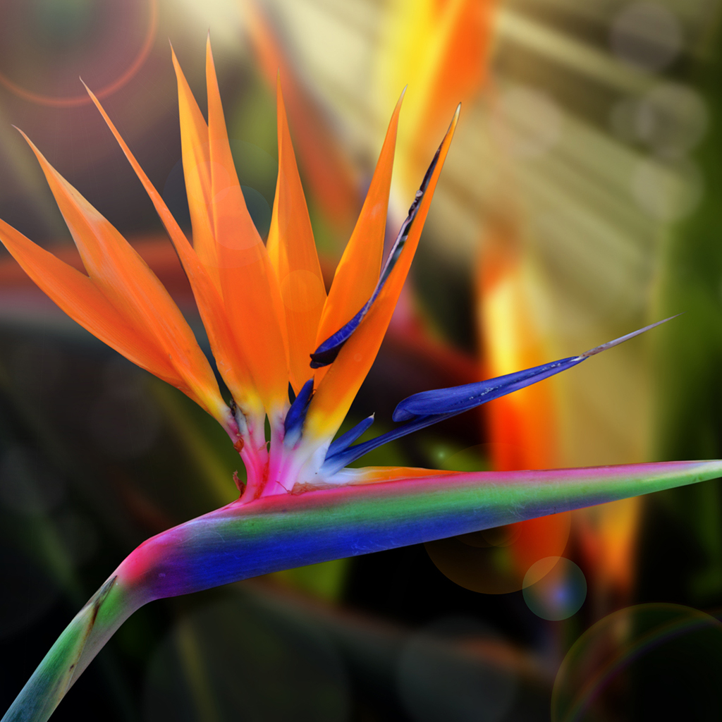 Crafters Choice Bird Of Paradise Fragrance Oil 321 Wholesale Supplies Plus