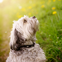 Dog Dayz Fragrance Oil (Special Order)