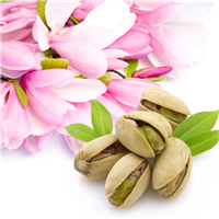 Pistachio & Magnolia* Fragrance Oil 204
