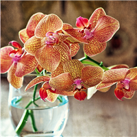 Orchid & Pink Amber* Fragrance Oil 245