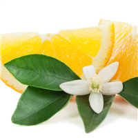 Orange Blossom Fragrance Oil 493
