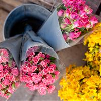 Flower Cart Fragrance Oil 671