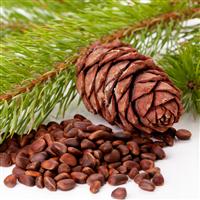 Cedar Bean Fragrance Oil 746