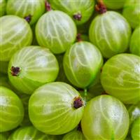 Gooseberry Guava Fragrance Oil (Special Order)