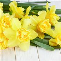 Tangerine & Daffodil Fragrance Oil (Special Order)