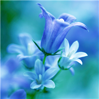 Waterlily & Bluebell Fragrance Oil 84