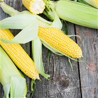 Farmers Market Sweet Corn FO (Special Order)