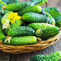 Cucumber, Violet & Fennel Fragrance Oil 855
