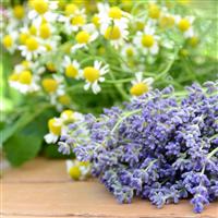 Lavender Chamomile* Fragrance Oil 857