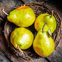 Pear & Coconut - Sweetened Flavor Oil 886