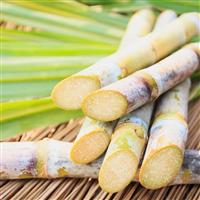 Sun Kissed Sugarcane Fragrance Oil (Special Order)
