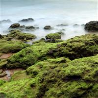 Icelandic Seamoss - Natural Fragrance Oil 926