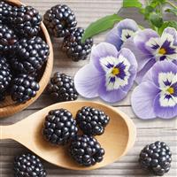Blackberry & Sugared Violets Fragrance Oil 927