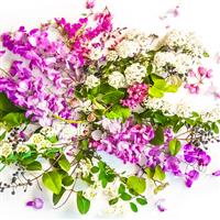 Citrus Blossoms & Heliotrope Fragrance Oil (Specia