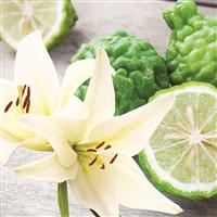 Bergamot & Lily - Natural Fragrance Oil 942