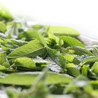 Lemongrass Sage* Fragrance Oil 160