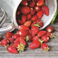 Wild Strawberry Fragrance Oil 958