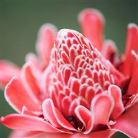 Ginger Flower & Hemp Fragrance Oil 966