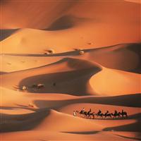 Sahara Spice* Fragrance Oil (Special Order)