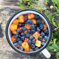 Huckleberry & Mandarin FO (Special Order)