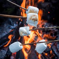 Campfire Marshmallow Fragrance Oil 995