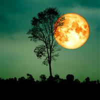 Harvest Moonlight Fragrance Oil 973