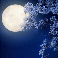 Moonflower Fragrance Oil 899