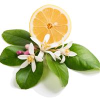 Honeysuckle Citrus - Natural Fragrance Oil 1150