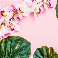 Aloha Orchid* Fragrance Oil 1080