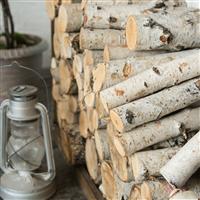 White Oak & Birch Fragrance Oil 1079