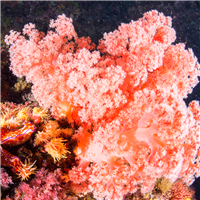 Living Coral Reef Fragrance Oil 1086