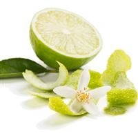 Lime Blossom & Jasmine - Natural FO 1096