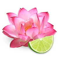 Pink Lotus & Lime Fragrance Oil 1110