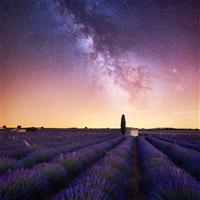Lavender & Tonka* Fragrance Oil 1134
