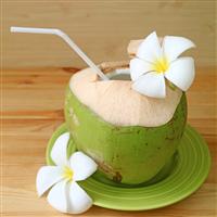Coconut Floral Fragrance Oil 1144