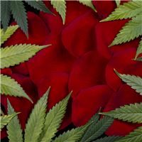 Cannabis Rose* Fragrance Oil 1162