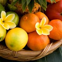 Plumeria Mandarin* Fragrance Oil 1173