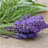 Lavender Sage - Natural Fragrance Oil 913