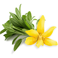 Ylang & Sage - Natural Fragrance Oil 1237