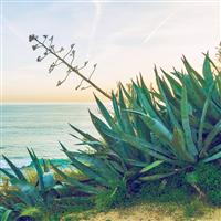 Aloe Water & Sea Kelp Fragrance Oil 157