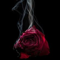 Hemp & Rose - Natural Fragrance Oil 1017