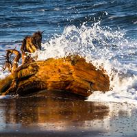 Sea Spray Driftwood* Fragrance Oil 1246